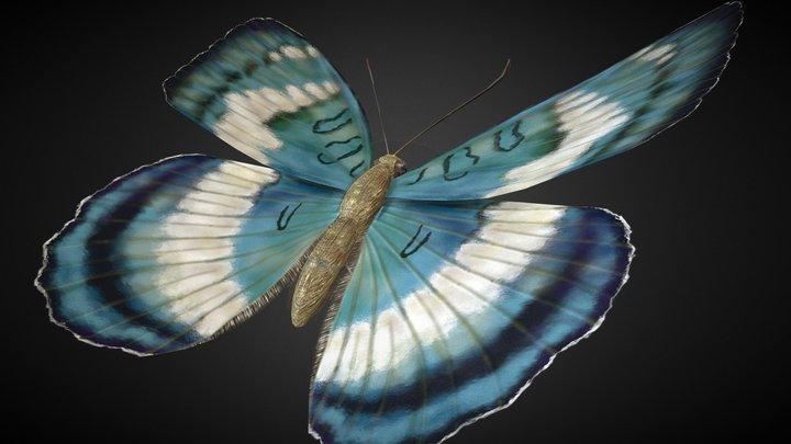 Euthalia Formosana Rigged 3D Model