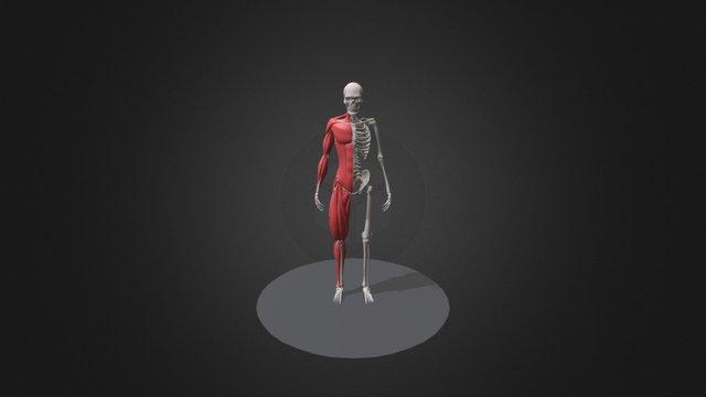Ecorche - WIP 3D Model