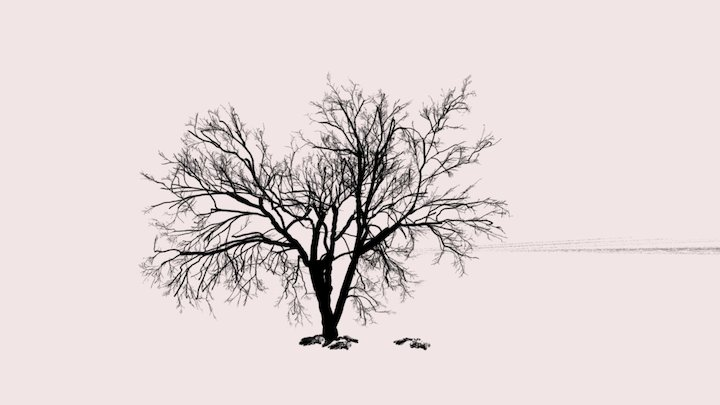 Vr Tree 3D Model