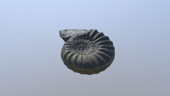 Obtuse Star Ammonite 3D Model