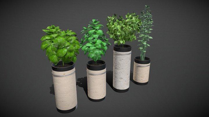 Vier kruiden 3D Model
