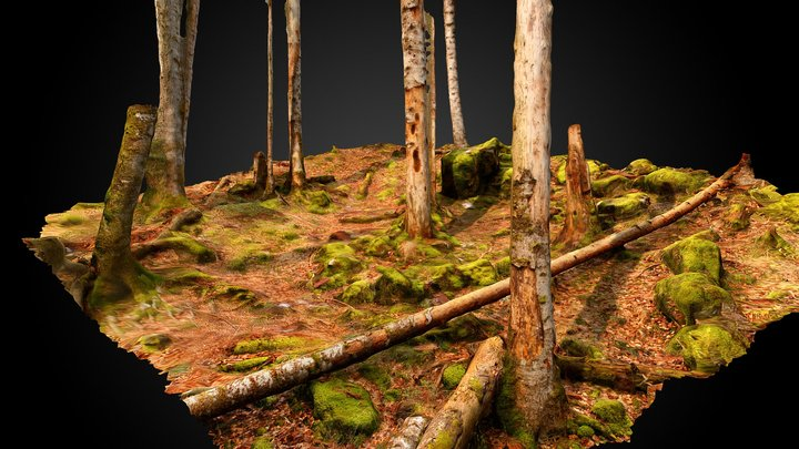 Beech forest (Fagus sylvatica) 3D Model