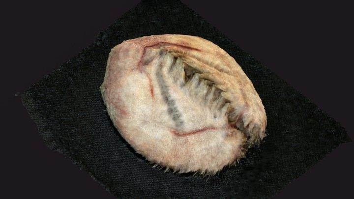 DY108 - Sea urchin 3D Model