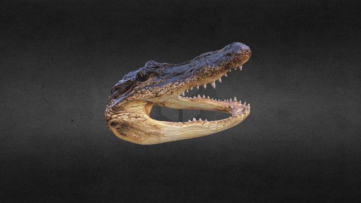 Alligator Head 3D Scan 3D Model