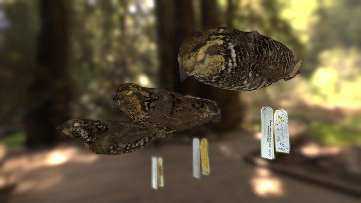 Bobwhite Quail Viewing-res 3D Model