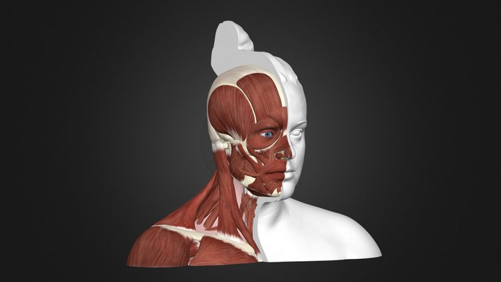 The Anatomy of the Human 3D Model