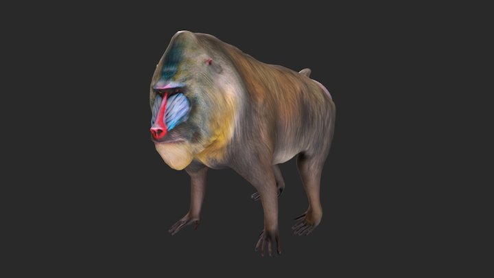 Mandrill 3D Model