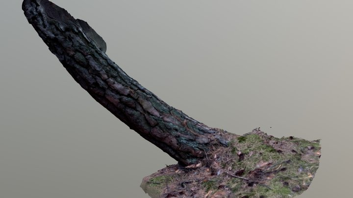 Photogrammetry - Tree Scan 1 3D Model
