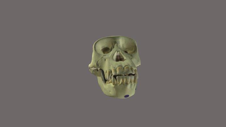 Crane de Chimpanze 3D Model