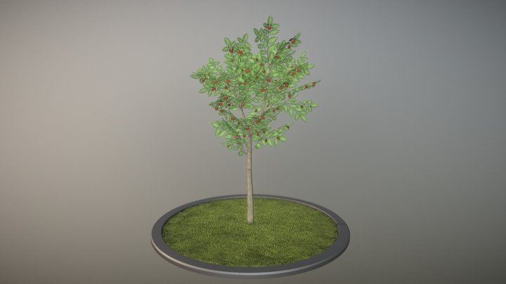 Rowan Tree - Sorbus-Aucuparia - 4m - Summer 3D Model