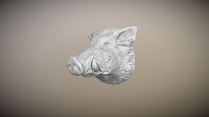 The muzzle of a wild boar 3D Model