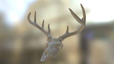 Deer Skull and Antlers 3D Model