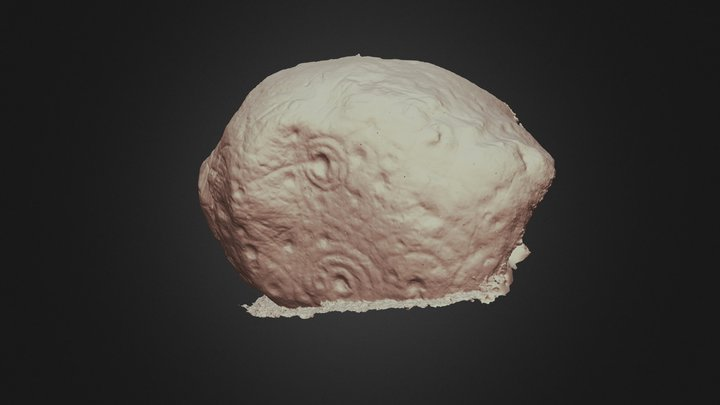 Carnew_Wi047-018_No_Texture 3D Model
