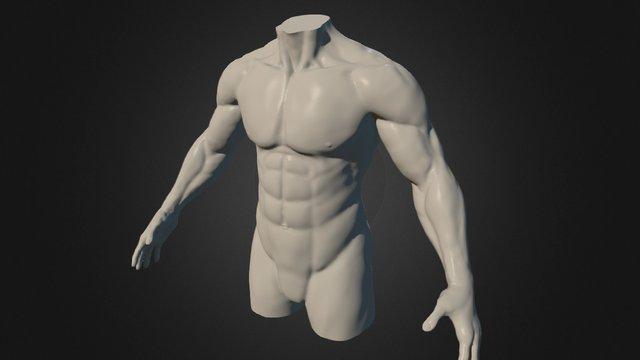 Torso - Anatomy Study 3D Model