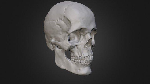 Skull Class 3D Model