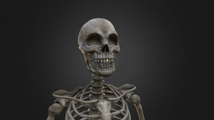 Skelly the Skeleton 3D Model