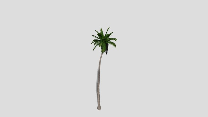 coconut palm/ Kokospalme 3D Model