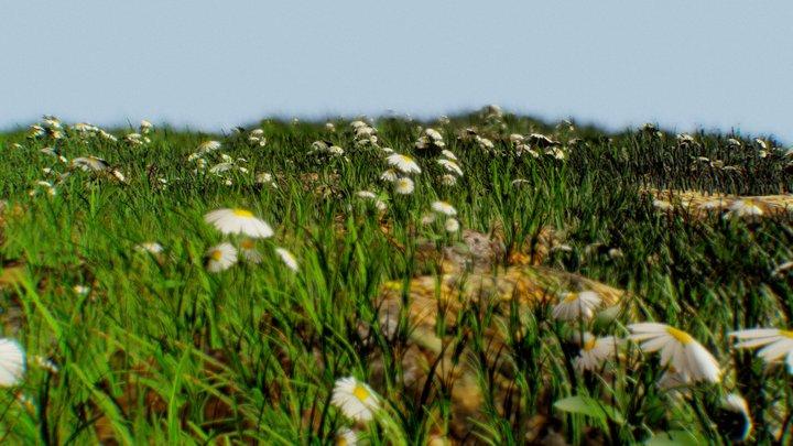 Grassy Field 3D Model