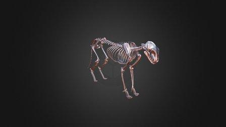 Feline Skeleton Dec 3D Model