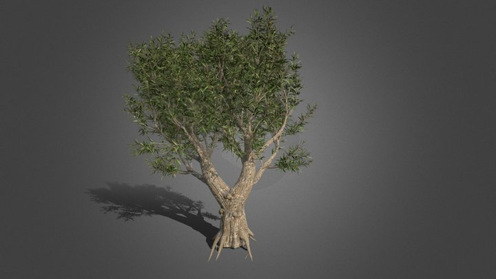 Medium Poly African Olive Tree 3D Model