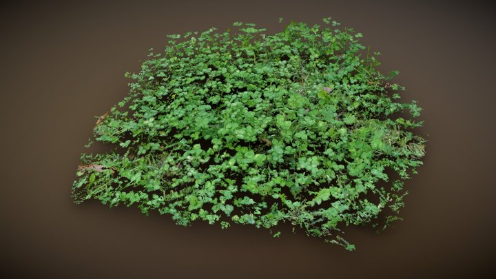 Find the Four Leaf Clover 3D Model