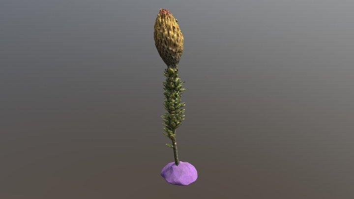 Chuquiragua 3D Model