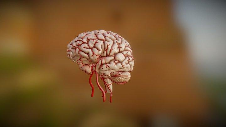 Brain Aneurysm Exploration 3D Model
