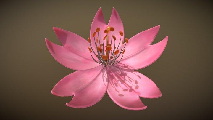 Sakura Cherry blossom - Flor de cerezo 3D Model
