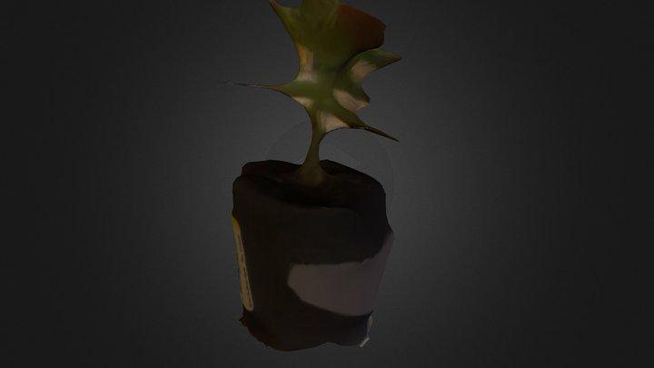 First Plant Model 3D Model