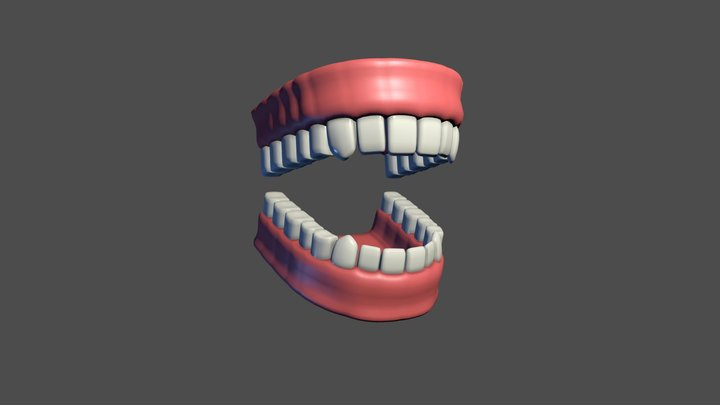 Rigged teeth with gums 3D Model