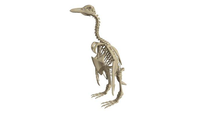Penguin Skeleton 3D Model