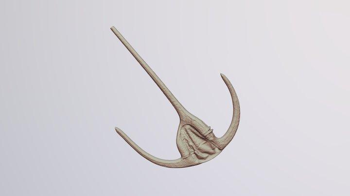 Ceratium sp. (Dinoflagellate) 3D Model