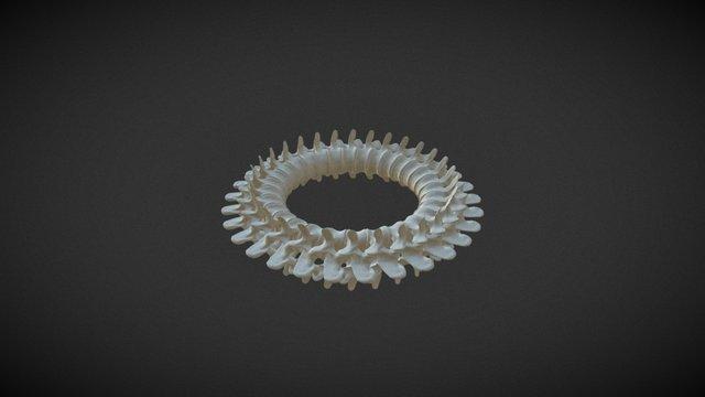 Wervels 3D Model