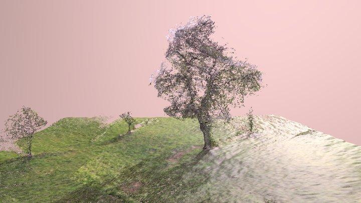 Photogrammetry tree experiment Friedberg Germany 3D Model