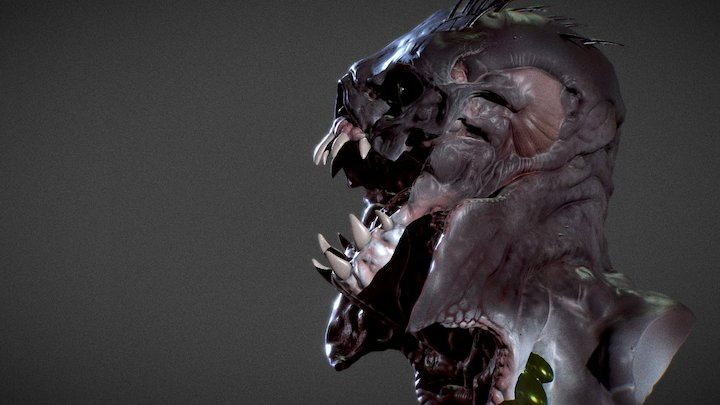 The Fly 3D Model