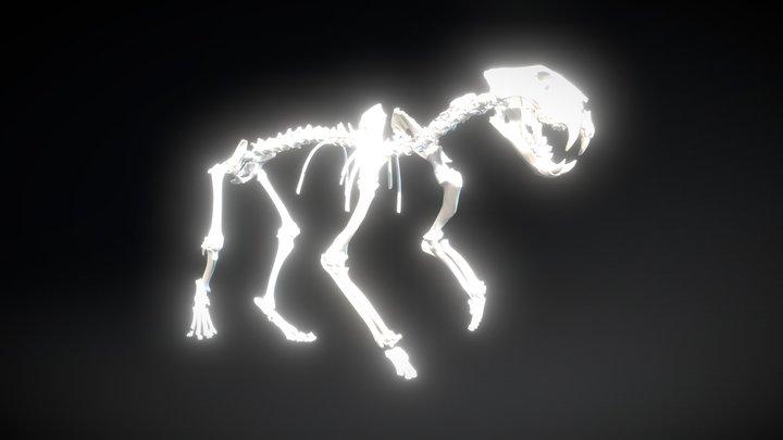 Lion Cave skeleton fossil 3D Model