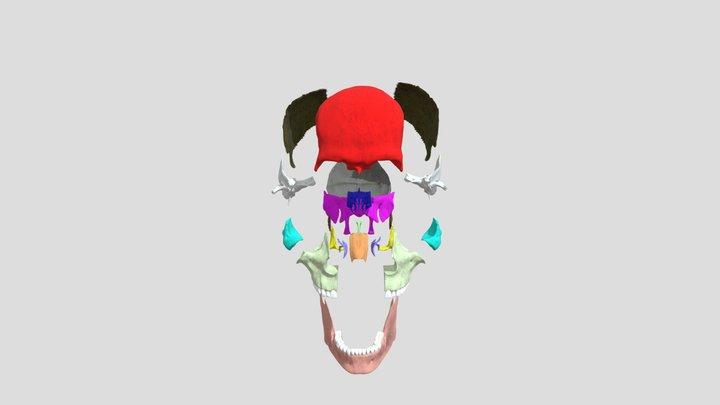 NEHC Academy Disarticulated Skull 3D Model