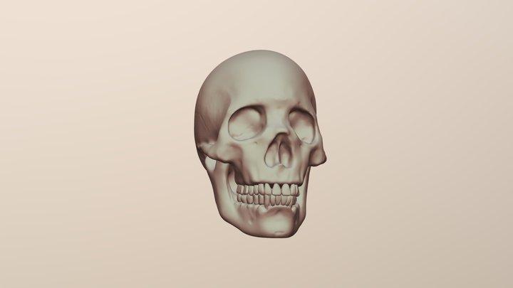 Skully Skull 3D Model