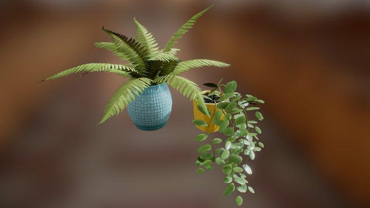 Houseplants. 3D Model