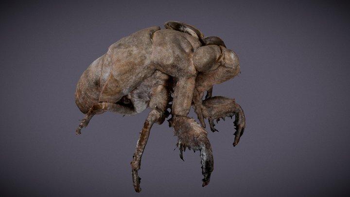Bug Skin on tree 3D Model