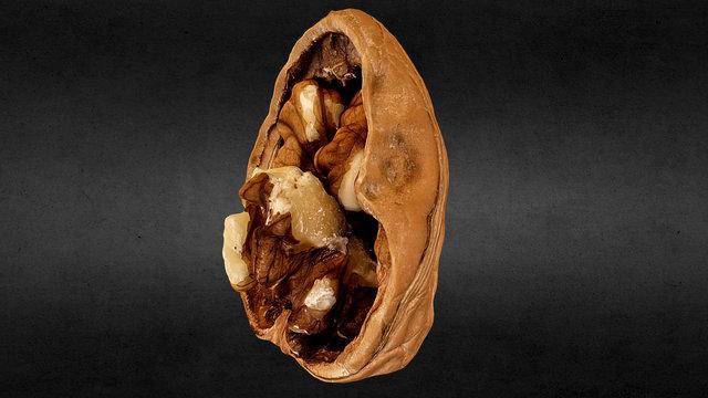 Cracked Walnut 3D Model