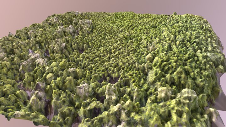 Naturally recovering mangrove forest 3D Model