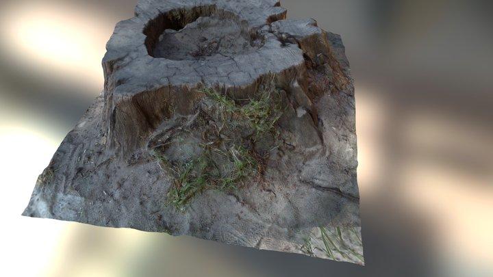 Korzeń - gosań 3D Model
