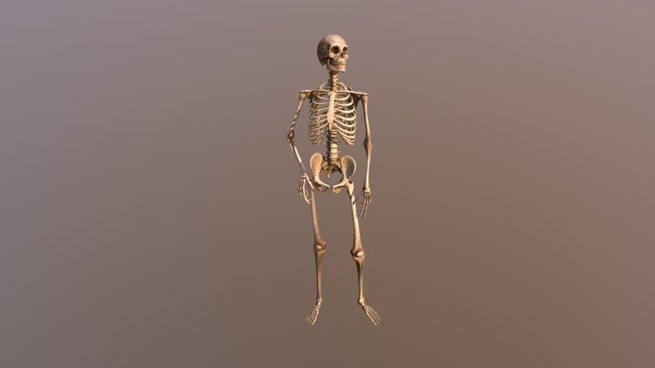 Curious Skeleton 3D Model