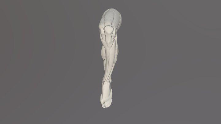 Pierna izquierda anatomia 3D Model