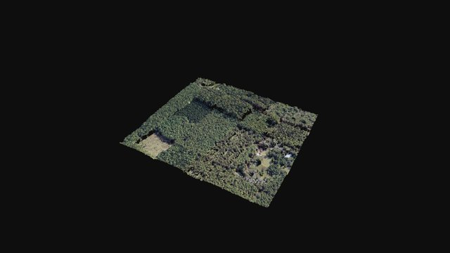 Forestry Point Cloud 3D Model