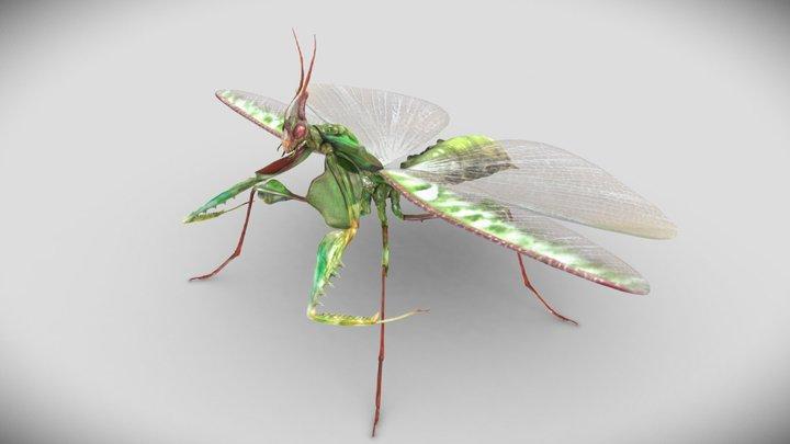 Giant Devil's Flower Mantis 3D Model