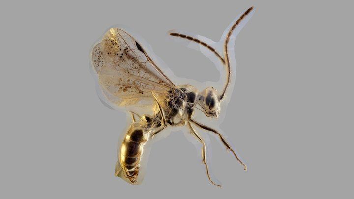 Ant in baltic amber 3D Model