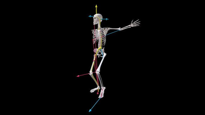 4 Act. Lines--One Leg, Chest Support Side, Rib8 3D Model