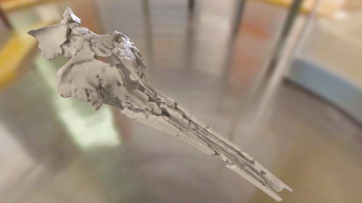 ChM PV4746 - Xenorophid Skull 3D Model